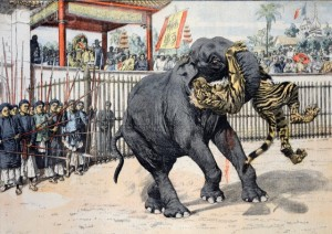 Elephant Tiger Fight Chinese or Vietnamese Circus (Annam)
